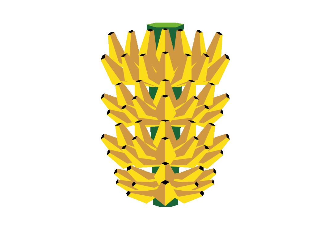 frutas ilustraciones-13